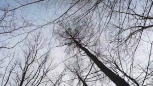Stadt Dortmund Kurz vor der Befreiung Wald